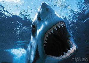 shark-attack-copy